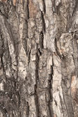 Rough wood tree bark texture background — Stock Photo