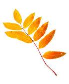 Autumn leaves — Photo