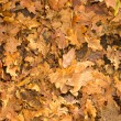 Royalty-Free Stock Photo: Golden autumn leaves