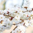 Tree branch in bloom — Stock Photo #25197485