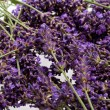 Lavender — Photo