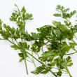 Green leaves of parsley isolated on white backgroun — Stock Photo #12522763