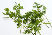 Green leaves of parsley isolated on white backgroun — Stock Photo