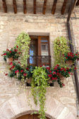 Flowers hangs on the window of a home — Stock Photo