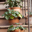 Stock Photo: Flowers in pots on stone steps medieval house in Assisi,