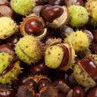 Ripe chestnuts - Stock Photo