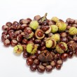 Ripe chestnuts — Stock Photo