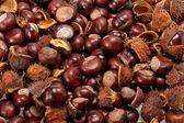 Ripe chestnuts — Stock Photo