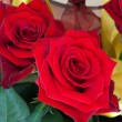 Beauty Red Roses — Stock Photo