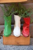 古い靴植木鉢に関する処理 — ストック写真