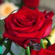 Stock Photo: Beauty Red Roses