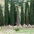 Stock Photo: Idyllic landscape with cypress