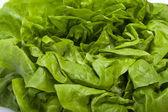 Fresh green Lettuce salad isolated on white background — Stock Photo