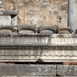 Ruins of the ancient Greek city Ephesus — Stock Photo