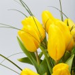 Yellow tulips isolated on white background — Stockfoto