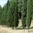 Idyllic landscape with cypress - Photo