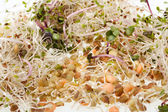 The healthy diet. Fresh sprouts — Stock Photo