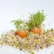 Royalty-Free Stock Photo: Fresh Alfalfa Sprouts and Spring Easter Egg