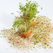 Fresh Alfalfa Sprouts and Spring Easter Egg — Photo