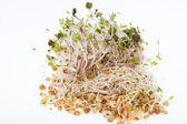 The healthy diet. Fresh sprouts isolated on white background — Stock Photo