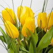 Yellow tulips isolated on white background — Stock Photo