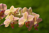 Freaky orchid pink and yellow — Stockfoto