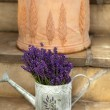 Watering Can and Lavende — Stock Photo