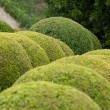 Boxwood  - Green garden balls in France, — Photo