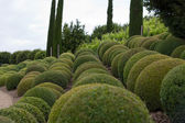 Boxwood - Green garden balls in France, — Stockfoto