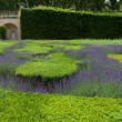Gardens with the flourishing lavender at castles in the valley of Loire — Stock Photo