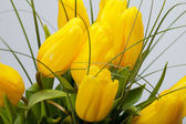 Yellow tulips isolated on white background — Stock Photo