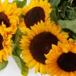 Sunflowers   isolated on white background — Zdjęcie stockowe