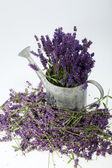 Watering Can and Lavender isolated on white — Stock Photo