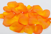 Petals of the orange-rose isolated on the white background — Stock Photo