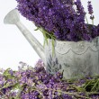 Watering Can and Lavender isolated on white — Photo