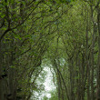 An avenue of trees in the grounds of the chateau of Chenonceau in France. — Stock Photo #38144899