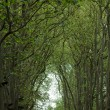 Stock Photo: Avenue of trees in grounds of chateau of Chenonceau in France.