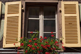 Window with shutters and flower pots — Stock Photo
