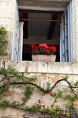 Window with flowers of geranium and roses — Stock Photo
