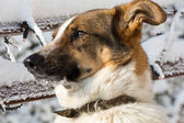 The homeless mutt clasped from the animal shelter — Stock Photo