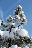 The winter-impression into the frosty day — Stock Photo