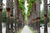 The neverending avenue with palms in Manacor. Majorca, Spain — Stock Photo
