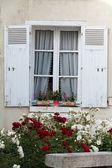 White window with  flowers of geranium and roses — Stock Photo