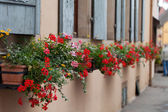 Windows of a house in Eguisheim, Alsace, France — Stockfoto