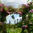 The romantic alley-way in the pergola from roses. — Stock Photo