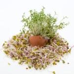 新鲜苜蓿芽和春天复活节彩蛋 — 图库照片 #45584445