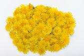 Beautiful yellow flower of Dandelion — Stock Photo