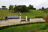 Vineyard in the famous wine making region - Loire Valley , France — Stock Photo