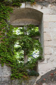 Unshaven with the grapevine the window in the castle Montresor. Loire Valley — Stockfoto