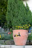Yellow and pink flowers in the ceramic flowerpot — Stock Photo